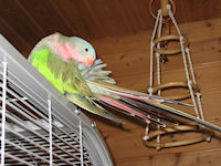 badeschalen für papageien